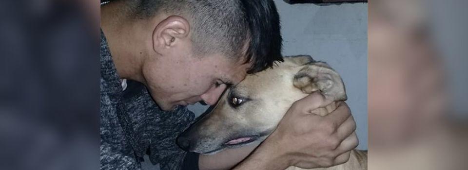 Desesperado após ter seu cachorro roubado, ele oferece seu carro para quem conseguir encontrá-lo