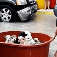 Eles Perderam Tudo em Enchente, Mas Conseguiram Resgatar o que era Valioso Para Eles; Seus Animais de Estimação