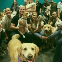"""Empresa cria """"dia do cachorro"""" para funcionários levarem seu pets para o escritório"""
