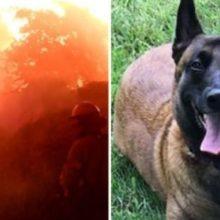 Família é Salva de Incêndio Graças à Incrível Reação Deste Cão!