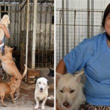 Mulher Resgatou Mais de 1000 Cães de Serem abatidos e Cuida deles na Pandemia