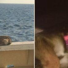 Perdido no Mar, Cachorrinho de um ano Sobreviveu 5 Semanas Sozinho, até ser Resgatado