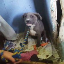 Salvadores Entram em Casa em Ruínas e Recusam-se a Sair sem os Cães que Vivem lá Dentro