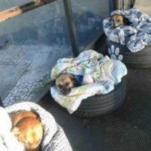 Três Cachorros foram Adotados em terminal de ônibus de Curitiba de uma Forma Especial