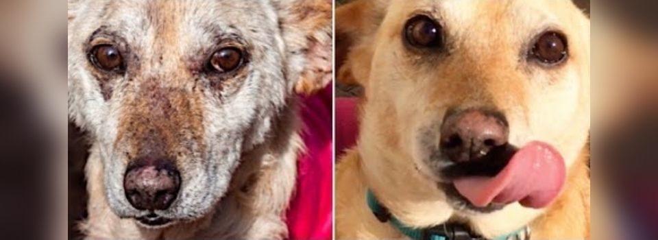 Veterinário salva cão da eutanásia e ele acaba sendo adotado por uma família amorosa