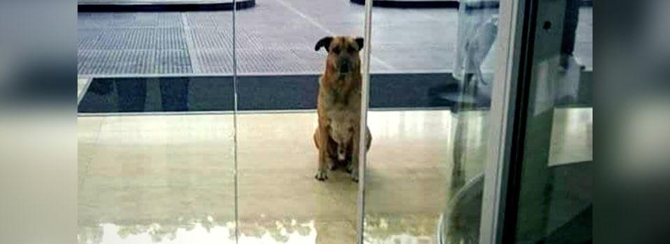 Aeromoça Adota Cachorro que Sempre Esperava Ela na Porta do Hotel
