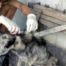 Anjo Resgata Cachorro que Estava a Beira da Morte e sua Mudança Impressionou a Todos