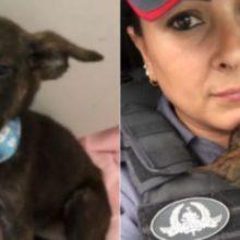 Após ser Jogado no Lixo, Filhote de cachorro é Resgatado e Adotado por Policial em MT