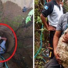 Bombeiros Agem Rapidamente e Resgatam Cachorro que Caiu em Poço