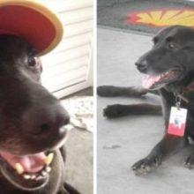 Cachorro Abandonado é Adotado e se Torna um Adorável Funcionário em Posto de Gasolina