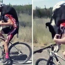 Cachorro Desidratado é Salvo por Ciclista que o Carrega nas Costas