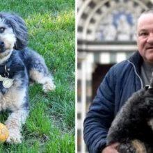 Cachorro Herói que foi Adotado Salva seu Dono de um Incêndio Doméstico Iminente!