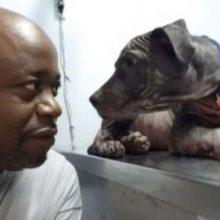Cachorro não Consegue Parar de Olhar para o Homem que o Resgatou das Ruas