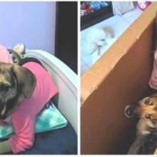 Cachorro Resgatado Após ser Atropelado, Agora é Melhor Amigo de Menina Autista