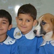 Cachorro resgatado por escola usa uniforme e participa das aulas
