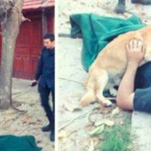 Cachorro Vigia seu dono até a Chegada dos Paramédicos no Local