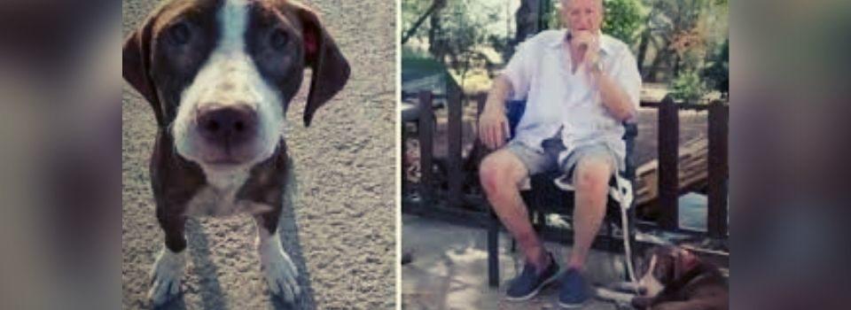 Amigo Fiel: Cadela não Abandona Homem Desaparecido com Alzheimer e Recebe a Melhor Recompensa