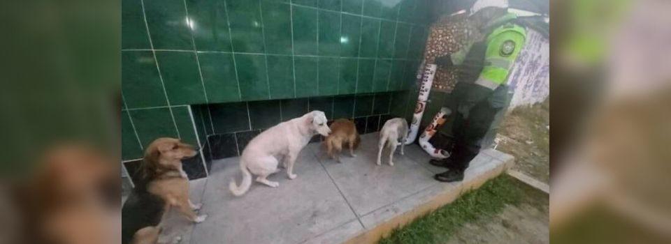 Cães de Rua Fazem Fila para se Alimentar em Comedouros Instalados pela Polícia