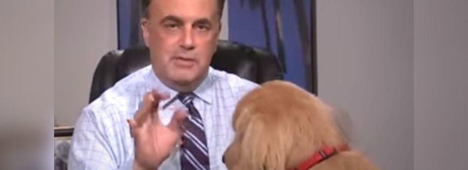 Cão Interrompe Live Ao Vivo de Seu Dono que Estava Passando a Previsão do Tempo