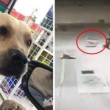 Cão perdido, adotado por posto de gasolina, salva-os durante assalto à mão armada