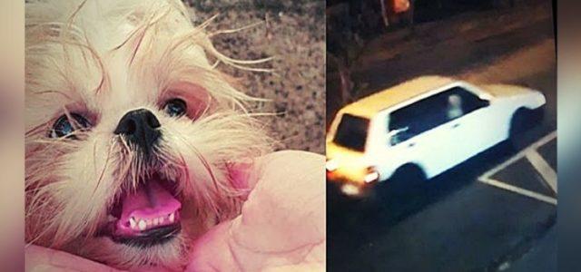 Cãozinho é Roubado por Casal em Minas Gerais e Família se Desespera