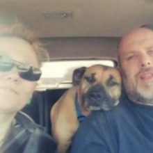 Casal deixa a porta do carro aberta, cão de rua entra e acaba sendo adotado
