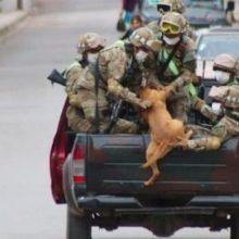 Dois Cães Abandonados Perseguem Carro Militar e São Adotados Pelos Soldados