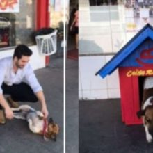 "Dono de Supermercado Adotou Cão de Rua que Rondava Pelo Local e o Batizou como ""Caixa Rápido"""