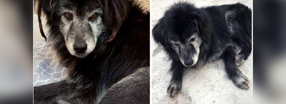 Ela Ajudou Cachorrinho Idoso e Surdo a Reencontrar sua Família Após 10 anos Vivendo nas Ruas
