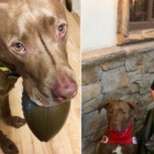 Esta mulher sofria de epilepsia e corria sério perigo – agora ela está segura graças ao seu cachorro