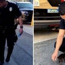 Filhote de Cachorro Abandonado nas Ruas Persegue Policiais na Tentativa de ser Adotado