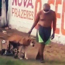 Homem Humilde Empurrando seu Cachorro Deficiente na Cadeira que ele Mesmo Construiu