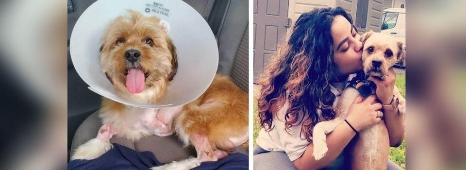 Leitores se Reúnem para Salvar Cachorro que Perdeu a Perna Após um Atropelamento