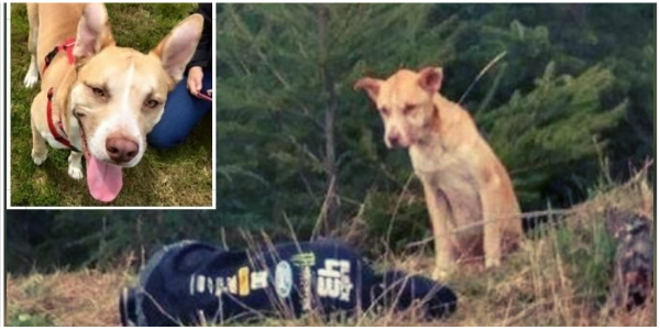 Menina Finge que Está Ferida para Resgatar Cachorro que foi Abandonado