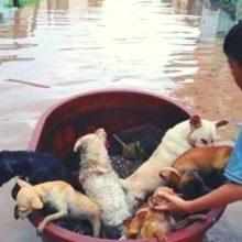 Menino de 10 anos usa balde plástico para salvar animais de inundação