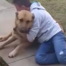 Menino Reencontra seu Cachorro Perdido e não Segura sua Emoção – Sabia que eu te Encontraria!