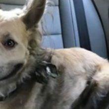 Por causa de seu Sorriso, Mulher Decidiu Adotar Cachorro que Vivia em Abrigo