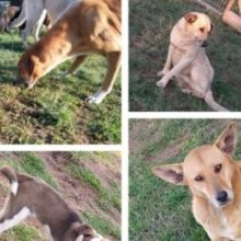 Ação solidária arrecada ração para mais de 120 cães abandonados