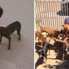 Aos 17 anos, ele abriu um abrigo para animais sem-teto. Ele já resgatou 22 cachorros e 4 gatos da rua