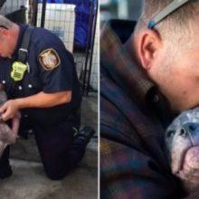 Bombeiro resgata cachorro em situação crítica e decide adotá-lo