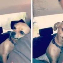 Cachorrinha faz questão de mostrar à dona que seu papai pertence à ela