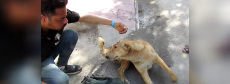 Cachorrinho Ferido Não Consegue Conter sua Alegria ao ser Resgatado