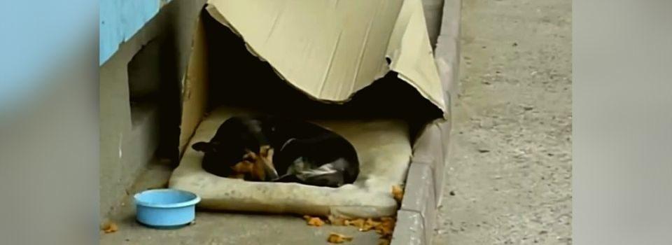 Cachorrinho que vivia em caixa de papelão é resgatado e passa por transformação