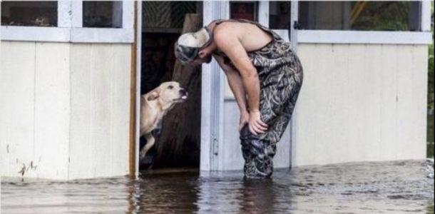 Cachorrinho se recusa a se separar do homem que o salvou depois de ser deixado para trás na enchente