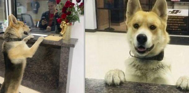 Cachorrinho vai a polícia relatar que está desaparecido e surpreende a todos