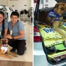 Cachorro adotado pela concessionária protagoniza campanha para ajudar os outros cães