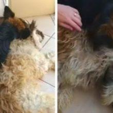 Cachorro Chora Desconsolado Sobre o Corpo do seu Melhor Amigo Pensando que ele Havia Falecido
