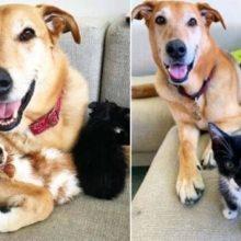 Cachorro cuida de gatinhos abandonados com todo amor do mundo