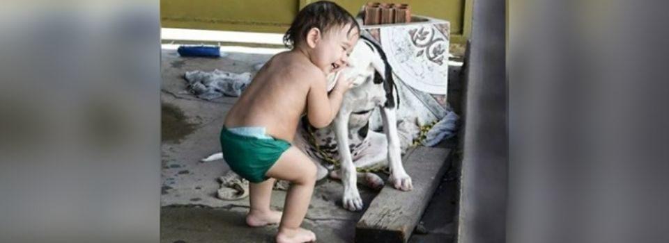 Cachorro perdido se reencontra com seu pequeno humano que nunca parou de perguntar por ele