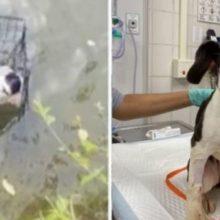 Cachorro que foi Abandonado em Gaiola no Lago é Resgatado e Adotado por Pescador